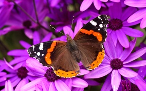 Wallpaper flowers, butterfly, wings, petals, moth