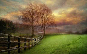 Picture field, landscape, tree, the fence