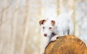 Picture dog, log, doggie