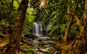 Picture forest, the sun, trees, branches, stream, stones, waterfall, moss, treatment, USA, Pisgah National Forest