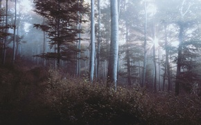 Picture forest, trees, nature, Germany, wood, leaves, Germany, Bad Pyrmont