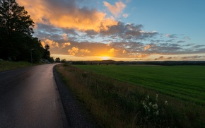 Picture road, greens, the sky, grass, the sun, clouds, rays, trees, landscape, sunset, flowers, nature, background, ...