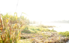Picture sand, beach, grass, water, the sun, macro, nature, Rosa, river, mood, beauty, the evening, Shore, …