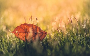 Wallpaper greens, grass, macro, background, widescreen, Wallpaper, blur, leaf, wallpaper, leaf, widescreen, background, full screen, HD ...