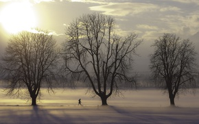Picture trees, winter, clouds, snow, fog, sunlight, freeze, branches, person, mist, walking, frost