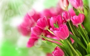 Wallpaper flowers, pink, bouquet, tulips