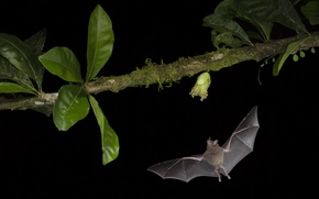 Picture flight, night, plant, bat