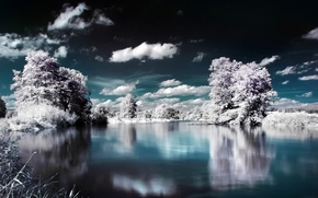Picture water, clouds, snow, trees