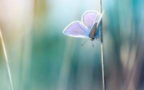 Picture macro, photo, background, Wallpaper, butterfly, plants, a blade of grass, wallpapers