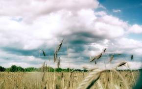 Wallpaper field, trees, Clouds
