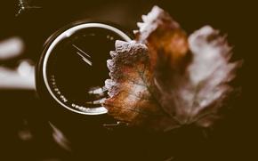 Picture autumn, macro, sheet, lens