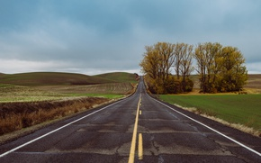 Picture road, trees, countryside, farm, cloudy, rainy, farmland