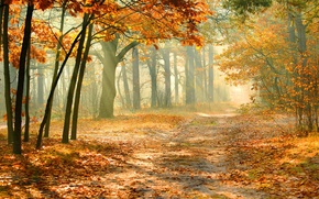 Picture autumn, forest, falling leaves, sunlight