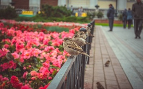 Picture autumn, flowers, birds, nature, Moscow, Sparrow, the Kremlin