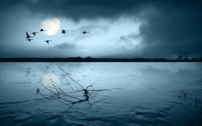 Picture sadness, birds, the moon, branch, 149