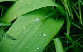 Picture rain, water, leaf, droplets, Rain drops