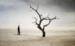 Picture cherry, tree, desert, the situation, guy