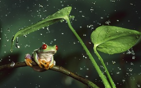 Wallpaper animals, leaves, water, drops, squirt, nature, stems, frog, animals