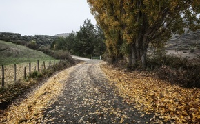 Picture road, autumn, nature, the fence
