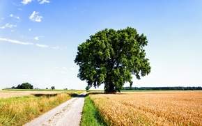 Picture road, field, clouds, rye, Tree, nature, clouds, tree, sun, lonely tree, Sunny day