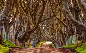 Picture alley, road, trees, nature