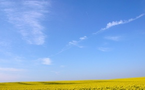 Picture field, the sky, flowers, Yellow