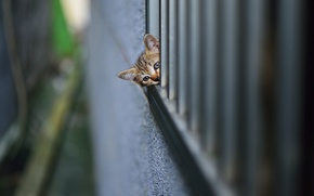 Picture kitty, looks, wall, spying
