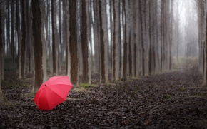 Picture forest, trees, landscape, red, the way, Nature, umbrella