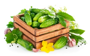 Picture flower, dill, box, box, flowers, cucumbers, garlic, Bay leaf, dill, garlic, cucumbers, Bay leaf