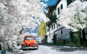 Picture trees, house, street, car, Istanbul, istanbul