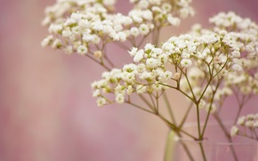 Picture macro, flowers, branch, vase, white, small, gypsophila