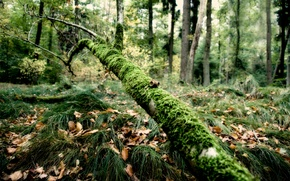 Picture forest, grass, moss, branch
