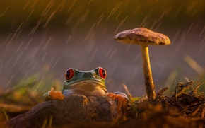 Picture reverie, sadness, rain, frog, colourfull, legs, red eyes, rain, wood, colorful, red eyes, mushroom, orange, …