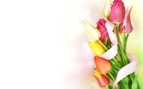 Picture drops, bouquet, tape, tulips, flowers, beautiful, bokeh, spring, Tulips, March