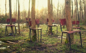 Picture chairs, trees, forest, the situation
