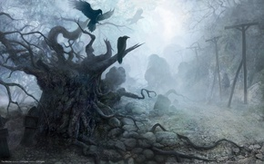 Picture the darkness, figure, Stones, crows, the witcher
