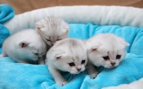 Wallpaper cat, cats, love, cat, cats
