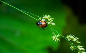 Picture Macro, Nature, Beetle