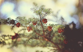 Wallpaper focus, branch, spruce, nature, bumps, bokeh, needles, needles