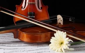 Picture flower, notes, violin, gerbera