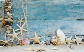 Picture marine, beach, seashells, beach, shell, sand, sand, starfishes, wood, stars