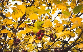 Picture Autumn, Leaves, Branches, Apple, Heat