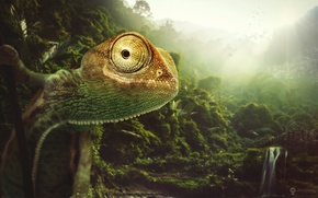 Picture nature, chameleon, animal, desktopography, chameleon