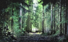 Picture forest, summer, grass, trees, foliage