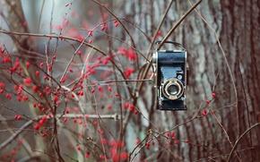 Picture nature, background, camera
