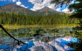 Picture forest, the sky, clouds, trees, mountains, lake, USA, glacier national park, montana