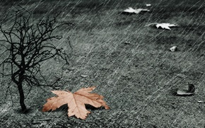 Picture sheet, rain, tree
