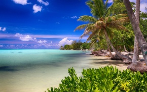Picture beach, nature, tropics, palm trees, the ocean