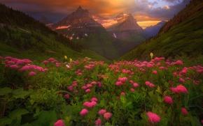 Wallpaper forest, mountains, flowers, summer