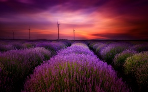 Picture the sky, clouds, landscape, sunset, flowers, nature, lavender